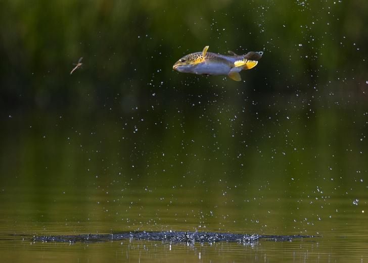 Фото №1 - Рыбья охота