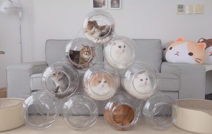 Фото №1 - Коты облюбовали бутыли для кулера и у хозяйки получился «капсульный отель» (видео)
