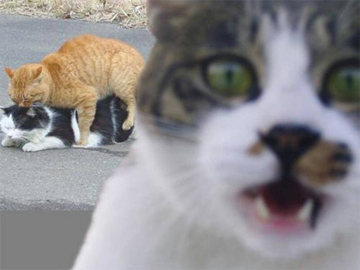 Фото №18 - 20 мемных котов, похожих на известных режиссеров