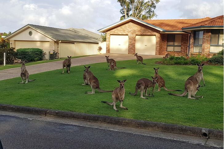 Фото №1 - Тринадцать кенгуру