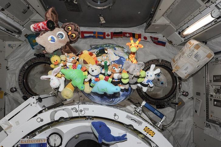 Фото №1 - Зачем космонавтам на борту мягкие игрушки