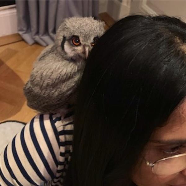 Фото №3 - Причуды звезд: Сальма Хайек завела дома живую сову
