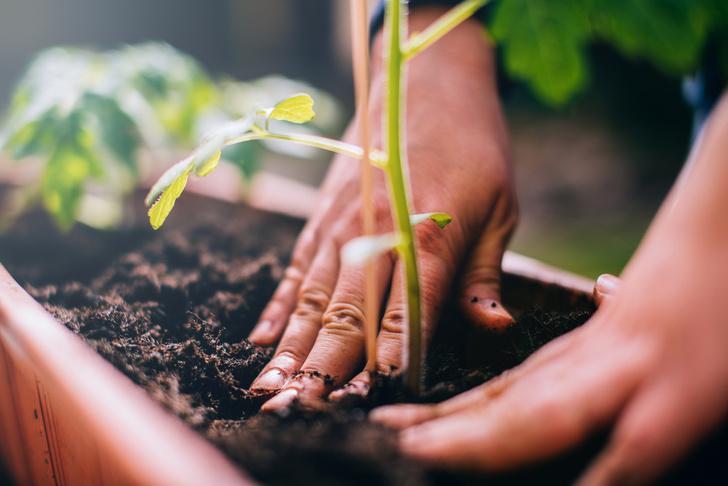 Фото №1 - 7 ошибок, которые совершают даже опытные садоводы