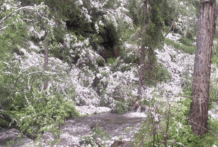 Фото №1 - В Саяно-Шушенском заповеднике выпал летний снег