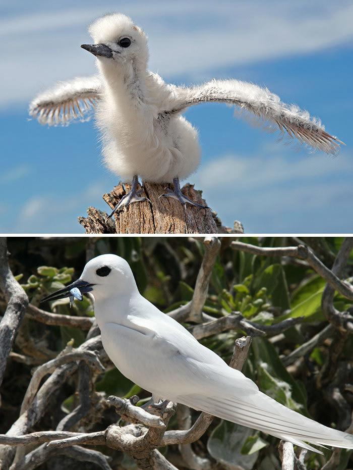 Фото №30 - 30 красивых птиц, которые были уродливыми птенцами (галерея)