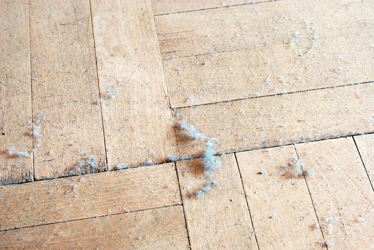 Фото №1 - Домашняя пыль может стать причиной рака и других заболеваний