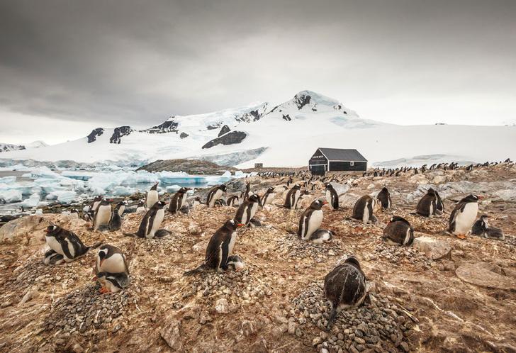 Фото №5 - В диких условиях: история полярных станций Антарктиды