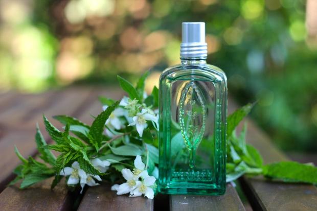 Фото №1 - Лучшие летние ароматы для дома
