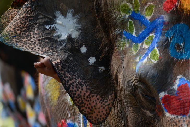 Фото №1 - Тайский Новый год