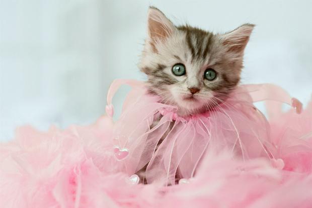 Фото №1 - Что, если бы ты была котиком