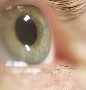 Фото №1 - Укол геном возвращает зрение