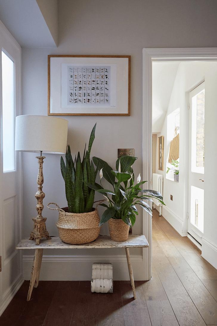 Фото №5 - Как освежить комнатные растения: 6 эффективных советов по уходу