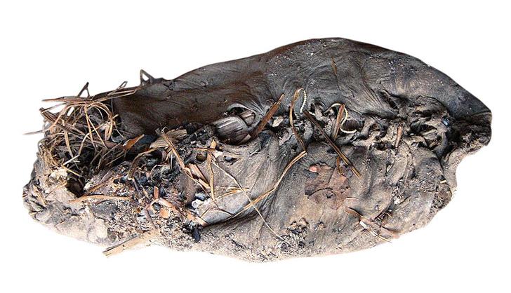 Фото №7 - 5500 лет назад… появилась письменность