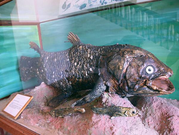 Фото №3 - Посвист креветки из Мозамбика