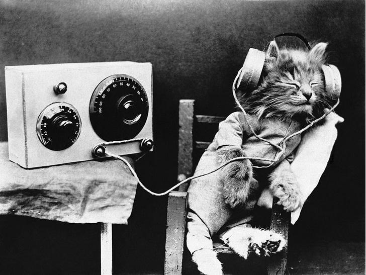 Фото №1 - Музыка помогает кошкам пережить стресс