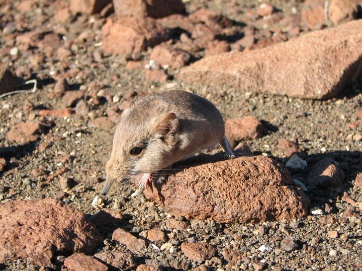 Фото №1 - В 2014 году ученые открыли более 200 видов живых существ