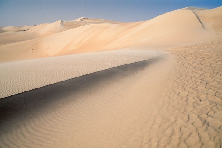 Фото №1 - В Сахаре раньше было море, и в нем обитали гигантские существа