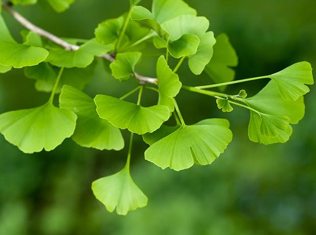 Фото №4 - Самые древние растения планеты