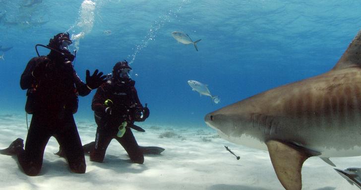 Фото №5 - Челюсти в фокусе: 5 нападений акул, которые потрясли мир