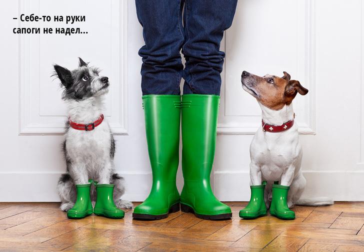 Фото №1 - Ученые: собаки научились копировать мимику людей в результате эволюции