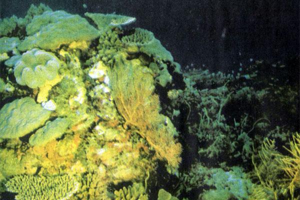 Фото №1 - «Каллисто» ищет риф