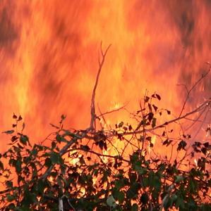 Фото №1 - Лесные пожары помешали туристам во Франции