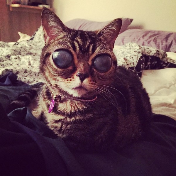 Фото №4 - ATTENTION! Глазастые кошки-пришельцы наступают!