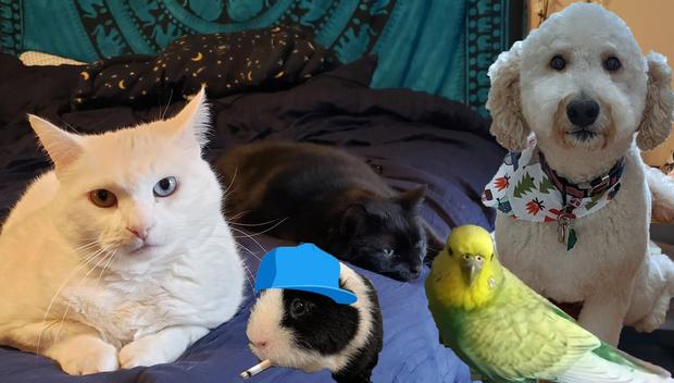 Фото №1 - В «Твиттере» рассказывают о своих животных как о коллегах