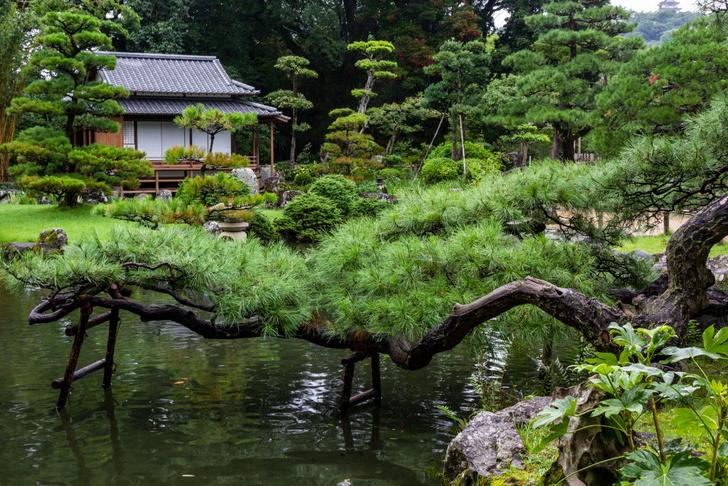 Фото №4 - Колыбель архитектуры, или Каменные джунгли: сады разных культур мира