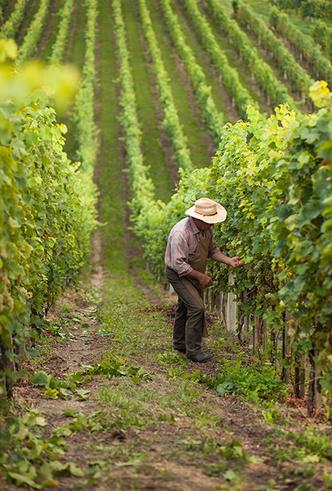 Фото №6 - Вино с приставкой «bio»: кто ввел тренд на биодинамические вина и где их искать
