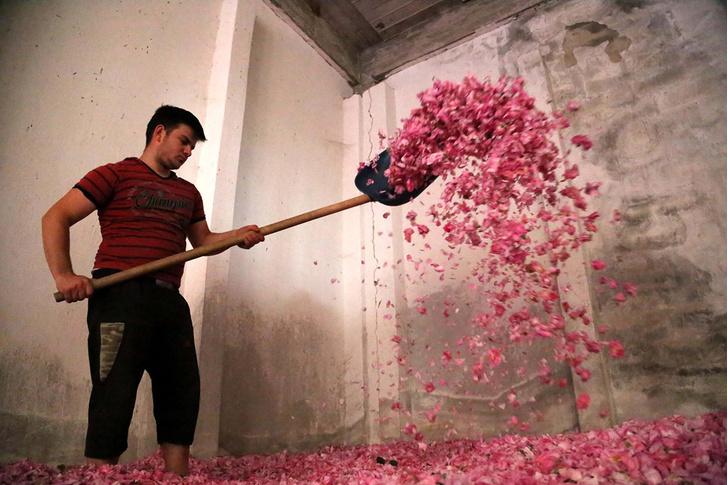Фото №1 - Город роз