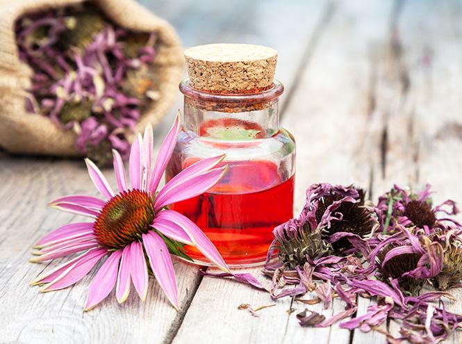 Фото №15 - Самые полезные лекарственные травы