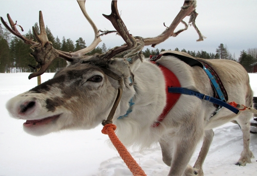 Фото №2 - В гостях у сказки: 10 вещей, которые нужно сделать в Лапландии