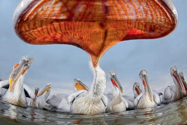Фото №1 - Рыбное блюдо