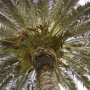 Фото №1 - У древних деревьев не было листьев