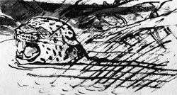 Фото №2 - Алан Кэйу. За ягуаром через сельву