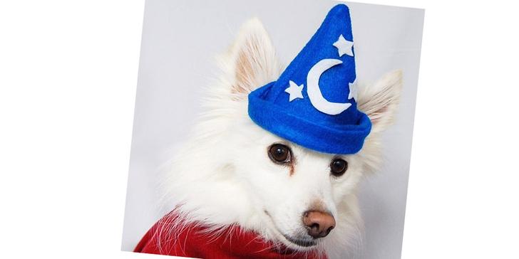 Фото №11 - 20 очаровательных собак в костюмчиках по мотивам мультфильмов Disney