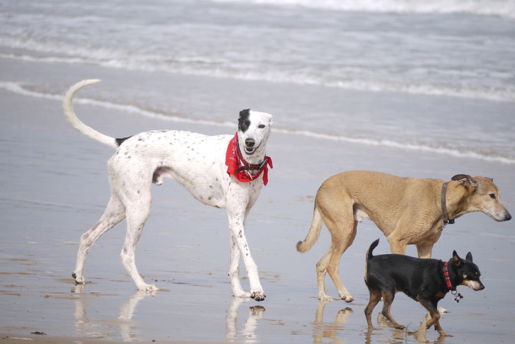 Фото №1 - В Барселоне открылся первый «собачий» пляж