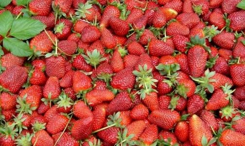 Фото №1 - Роспотребнадзор изымает ягоды, закупленные в ЕС