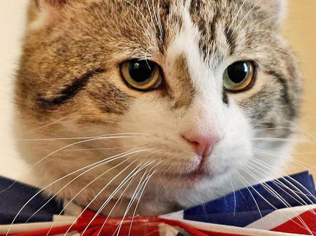 Фото №3 - Коты на службе Ее Величества
