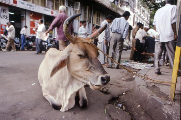 Фото №5 - Всё, что вы не знали о: профессиональные нищие, британские даблдекеры и еще 10 фактов о Мумбаи