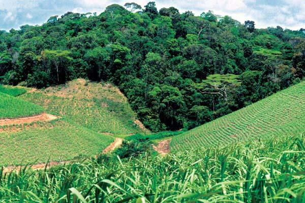 Фото №1 - Зеленое золото Баии