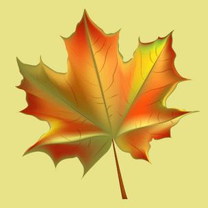 Фото №3 - Гадаем на осенних листьях: какого цвета будут глаза у твоего будущего парня 💖