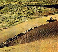 Фото №2 - Бесплодные края навахо