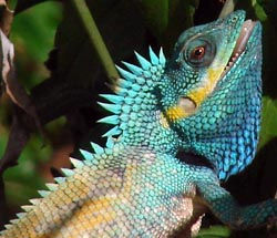 Фото №4 - Зеленый дракон совсем не страшен