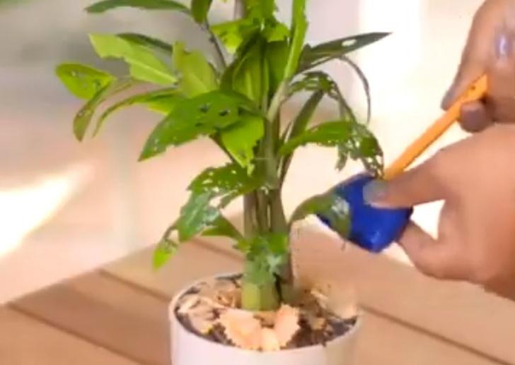 Фото №5 - 8 спасительных лайфхаков для комнатных растений