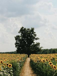 Фото №2 - Тест: Выбери дерево, и мы скажем, во сколько лет ты станешь успешной