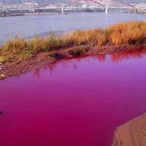 Фото №1 - В камчатскую реку попало 4 тонны извести