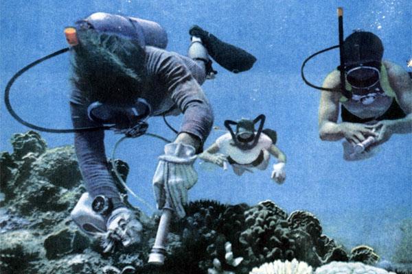 Фото №1 - Морские звезды против ББР