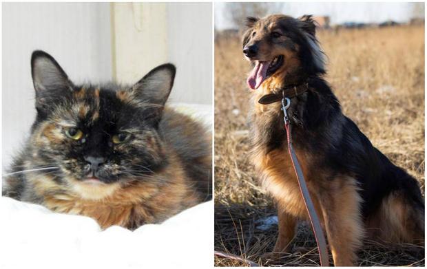 Фото №1 - Котопёс недели: кошка Челеста и пёс Пушок
